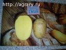 Картофель от производителя оптом