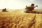 Привлекаем инвестиции, оптовая торговля зерном, экспорт.