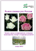 Рынок свежих роз и саженцев роз России