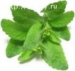 Стевия листовая оптом