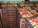 Яблоки калиброванные оптом со склада