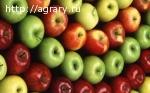 Яблоки кубанские урожай 2016 продаем